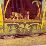 Ringling ammo cage # 79