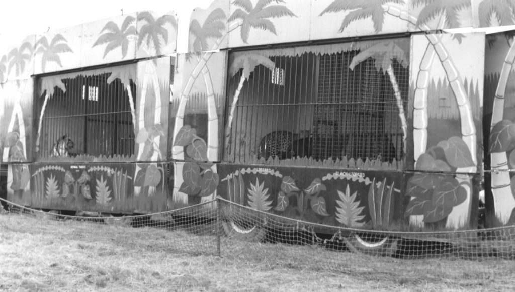 Ringling ammo cage # 81