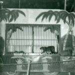 Ringling ammo cage # 74